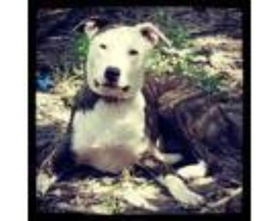 Adopt Meego a Brindle - with White Plott Hound / Mixed dog in Grand Bay
