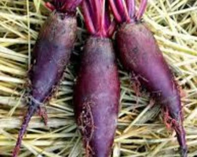 Beets WANTED