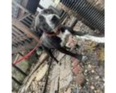 Adopt Penny a Pointer