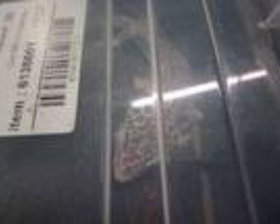 Adopt A1991779 a Lizard