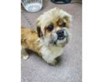 Adopt Skipper do a Tan/Yellow/Fawn Mixed Breed (Small) / Mixed dog in Cheyenne