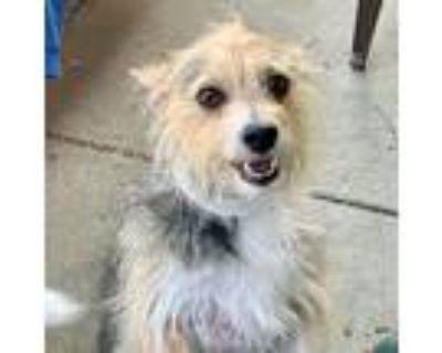 Bennie 49218, Terrier (unknown Type, Medium) For Adoption In Oakland, California
