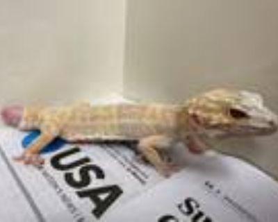 Adopt ELSA a Gecko