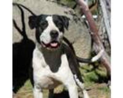 Adopt Lola a Terrier, Hound