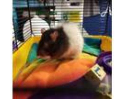 Adopt Sparrow a Rat