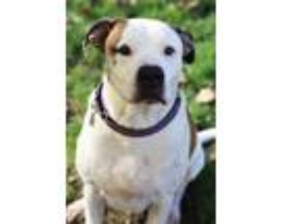 Adopt Loaf a Pointer, Terrier