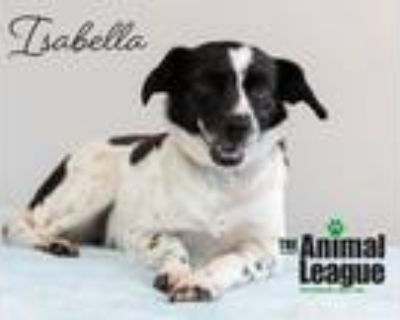Adopt Isabelle a Jack Russell Terrier, Dachshund
