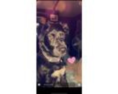 Adopt Jeffree a Black - with White Border Collie / Australian Cattle Dog / Mixed
