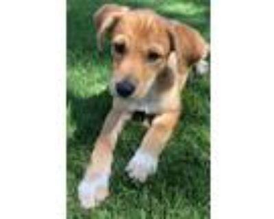 Adopt Ty a Terrier, Dachshund