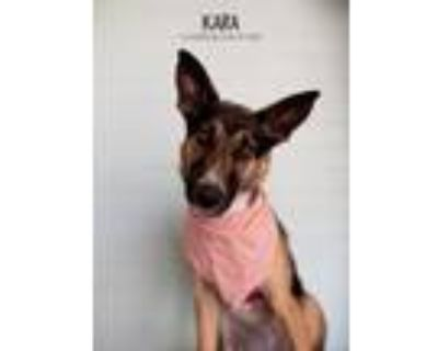 Adopt Kara a Black - with Tan, Yellow or Fawn German Shepherd Dog dog in