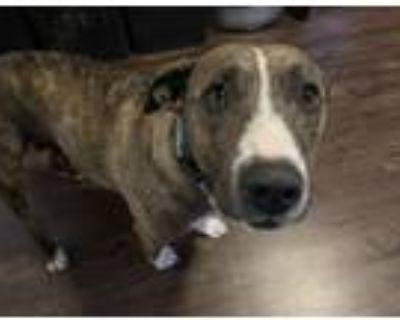 Adopt Grand Teton a Hound (Unknown Type) / Mixed dog in Alexandria
