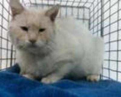 Adopt 21-07481 a Siamese