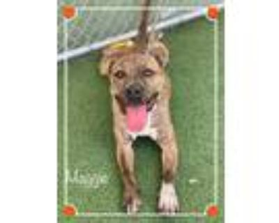 Adopt MAGGIE a Brindle - with White Boxer / Mixed dog in Marietta, GA (31607621)