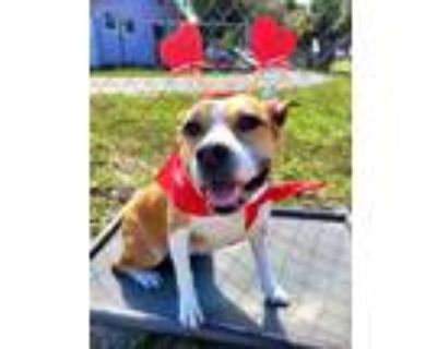 Adopt Sweetie a Terrier (Unknown Type, Small) / Mixed dog in Fort Myers