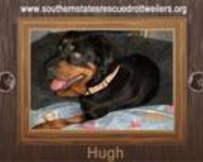 Adopt Hugh a Rottweiler