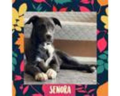 Adopt Senora a Collie / Mixed dog in Littleton, CO (29838692)