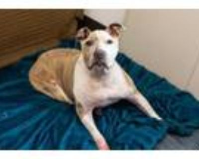 Adopt Jada-IN FOSTER a Mixed Breed
