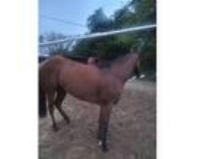 Race quarter horse