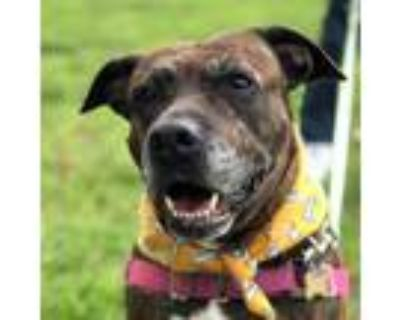 Adopt Pumpkaboo a Brindle Mixed Breed (Large) / Mixed dog in Richmond