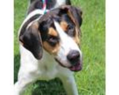 Adopt MacCoy (East Campus) a White Hound (Unknown Type) / Mixed dog in