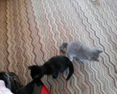 Kittens to Adopt