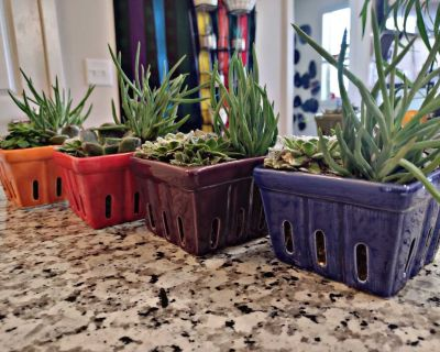 Live succulents with colorful planters, $15 each