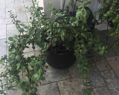 Patio Plants - moving sale