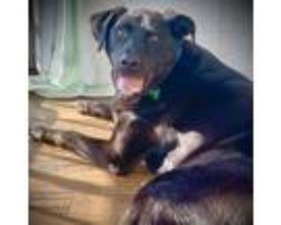 Adopt JB a Black Labrador Retriever / Mixed dog in Washington, DC (30371220)