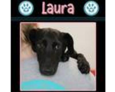 Adopt Laura 061921 (Destiny's Divas) a Black Labrador Retriever / Basset Hound