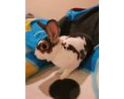 Adopt Oliver and Pongo a Rex