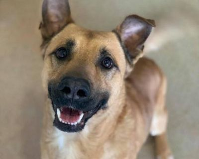 Male German Shepherd Dog / Mixed named Pine available for adoption